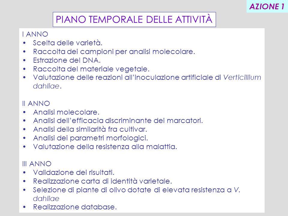 PIANO TEMPORALE DELLE ATTIVITÀ