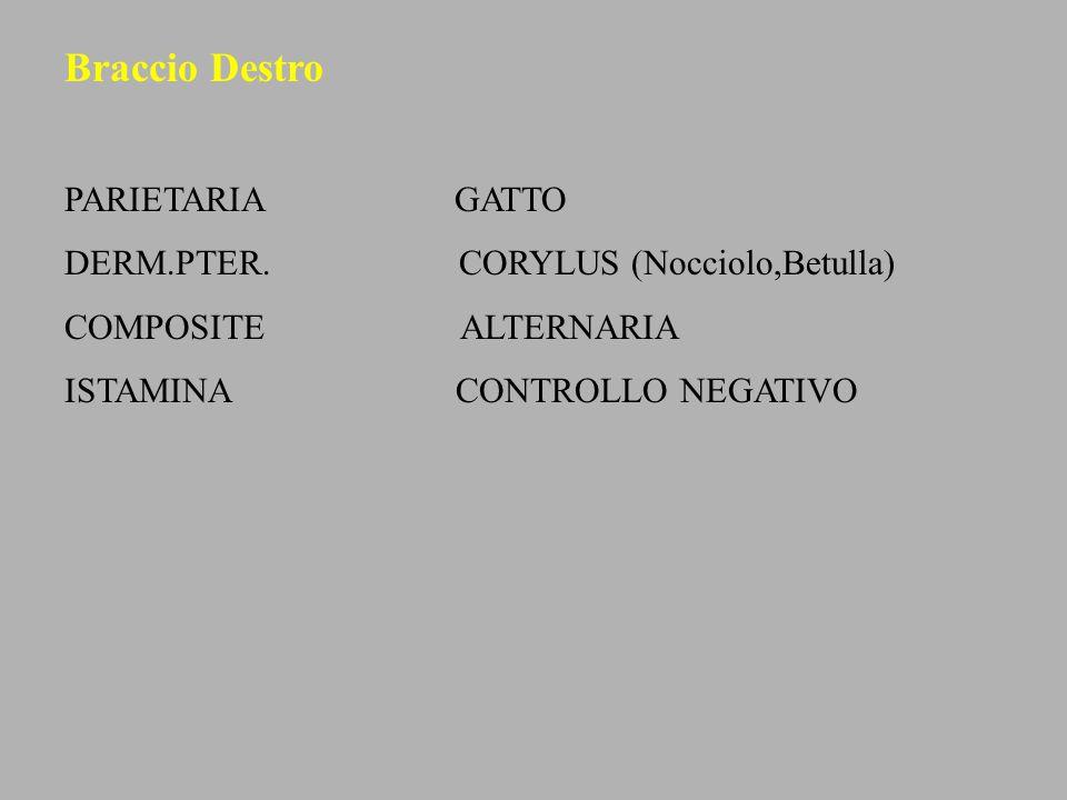 Braccio Destro PARIETARIA GATTO DERM.PTER. CORYLUS (Nocciolo,Betulla)
