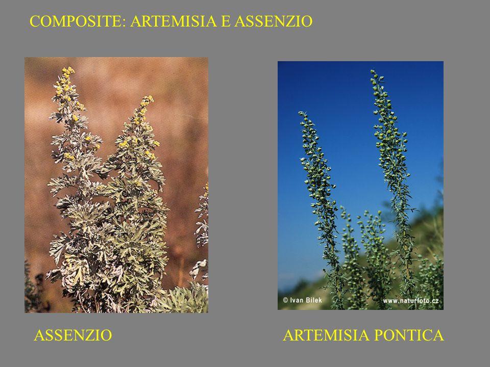 COMPOSITE: ARTEMISIA E ASSENZIO