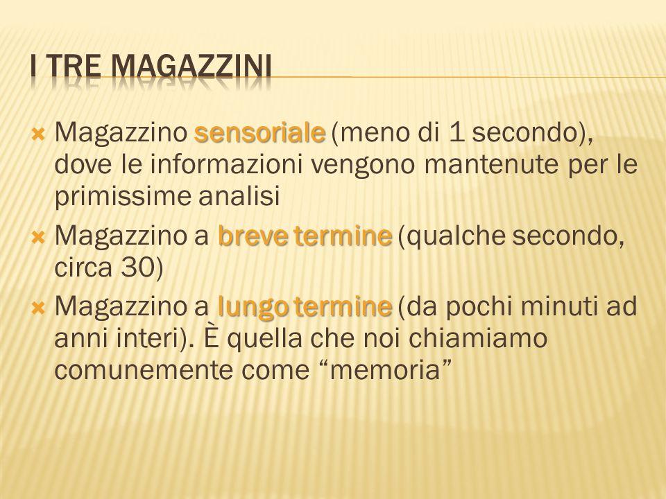 I tre magazzini Magazzino sensoriale (meno di 1 secondo), dove le informazioni vengono mantenute per le primissime analisi.