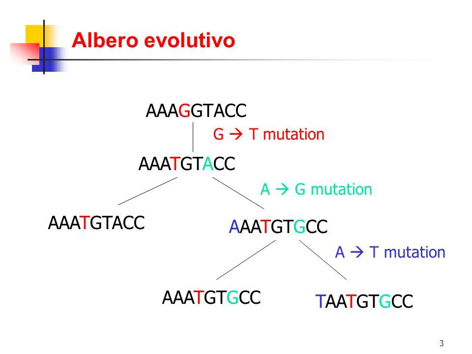 Albero evolutivo AAAGGTACC AAATGTACC AAATGTACC AAATGTGCC AAATGTGCC