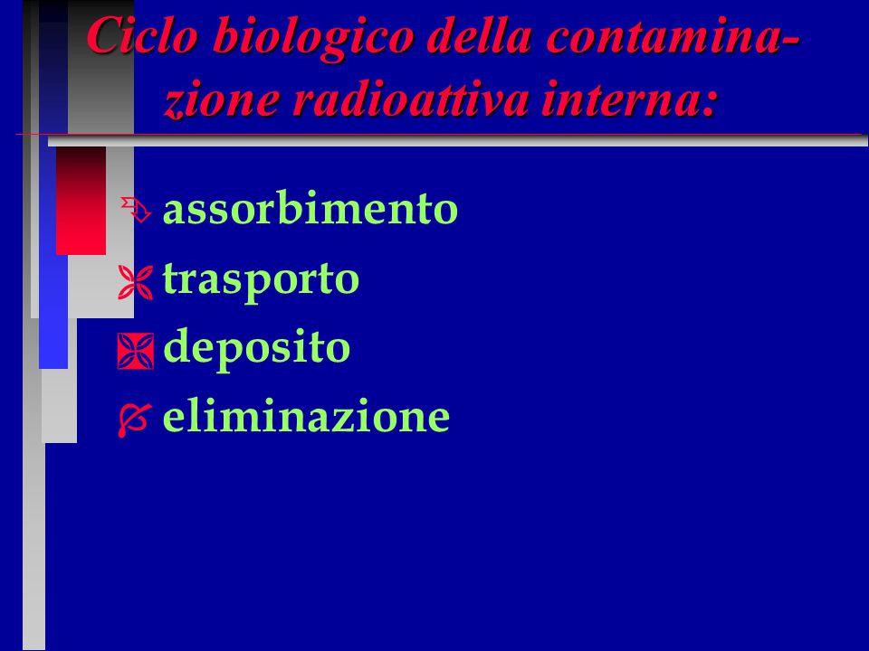 Ciclo biologico della contamina-zione radioattiva interna: