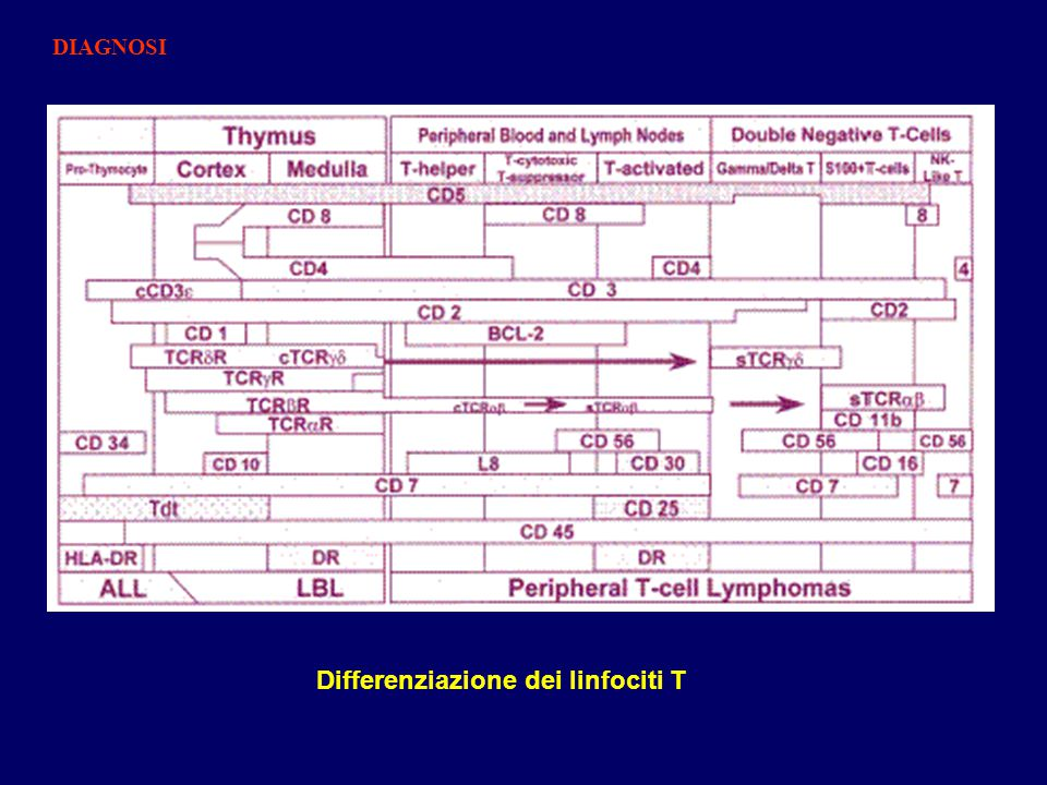 Differenziazione dei linfociti T