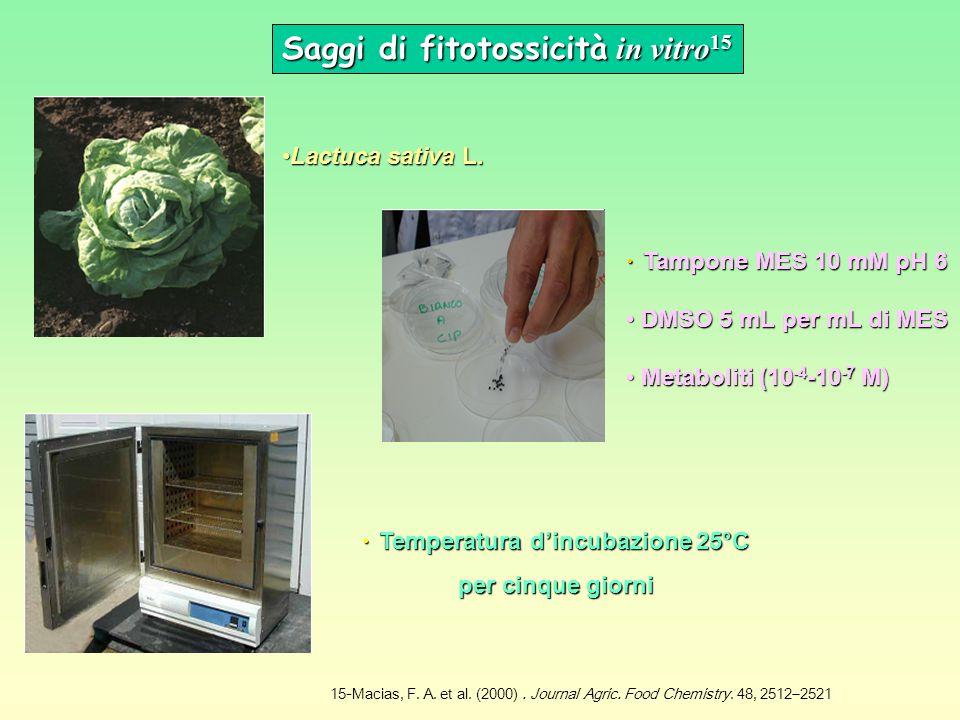 Saggi di fitotossicità in vitro15