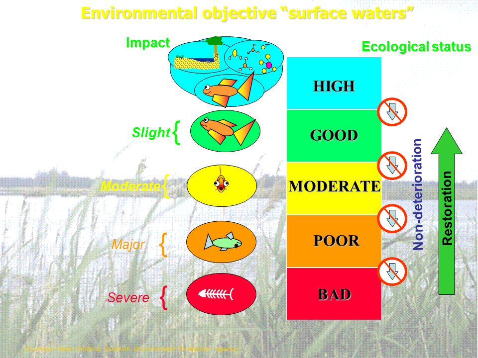 Environmental objective surface waters