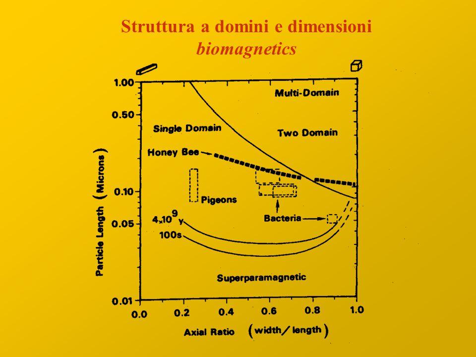 Struttura a domini e dimensioni
