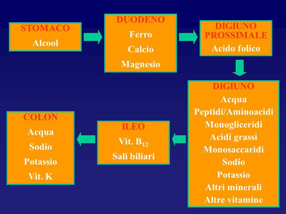 DUODENO Ferro. Calcio. Magnesio. DIGIUNO PROSSIMALE. Acido folico. STOMACO. Alcool. DIGIUNO.