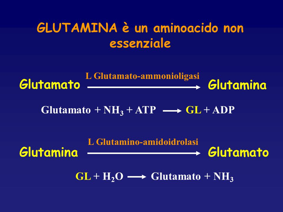 GLUTAMINA è un aminoacido non essenziale