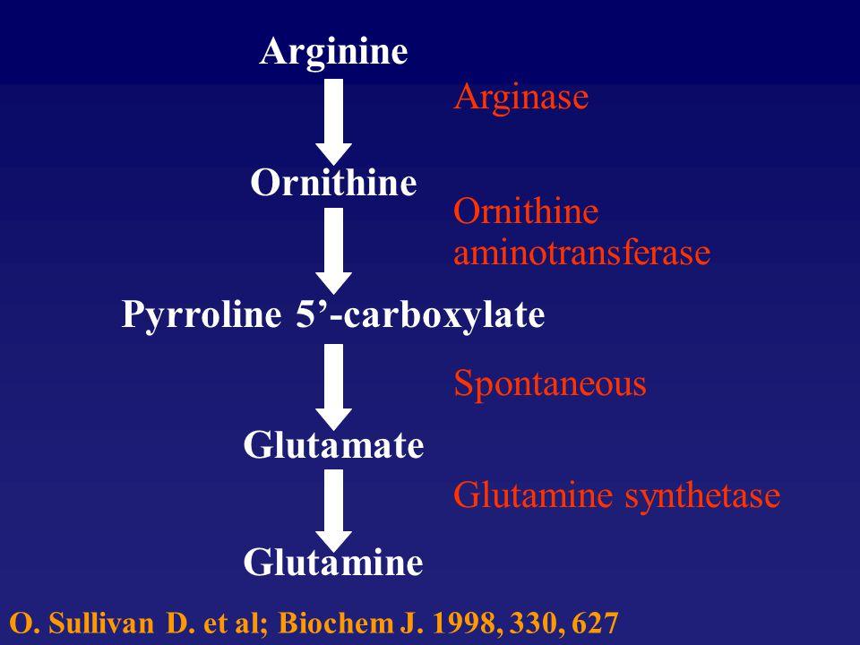 Pyrroline 5'-carboxylate