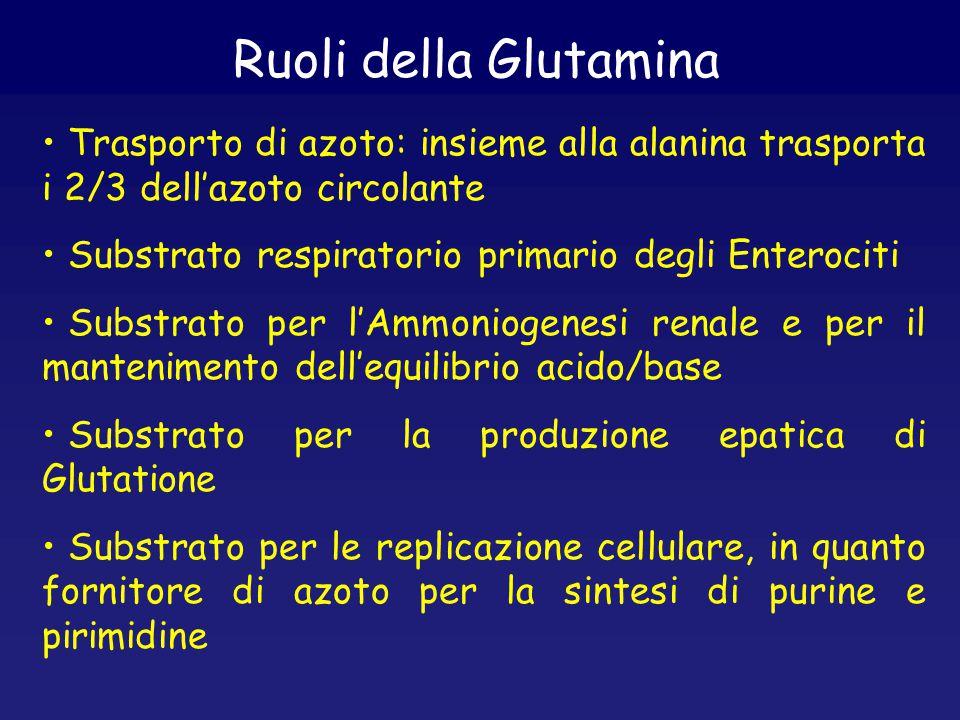Ruoli della Glutamina Trasporto di azoto: insieme alla alanina trasporta i 2/3 dell'azoto circolante.