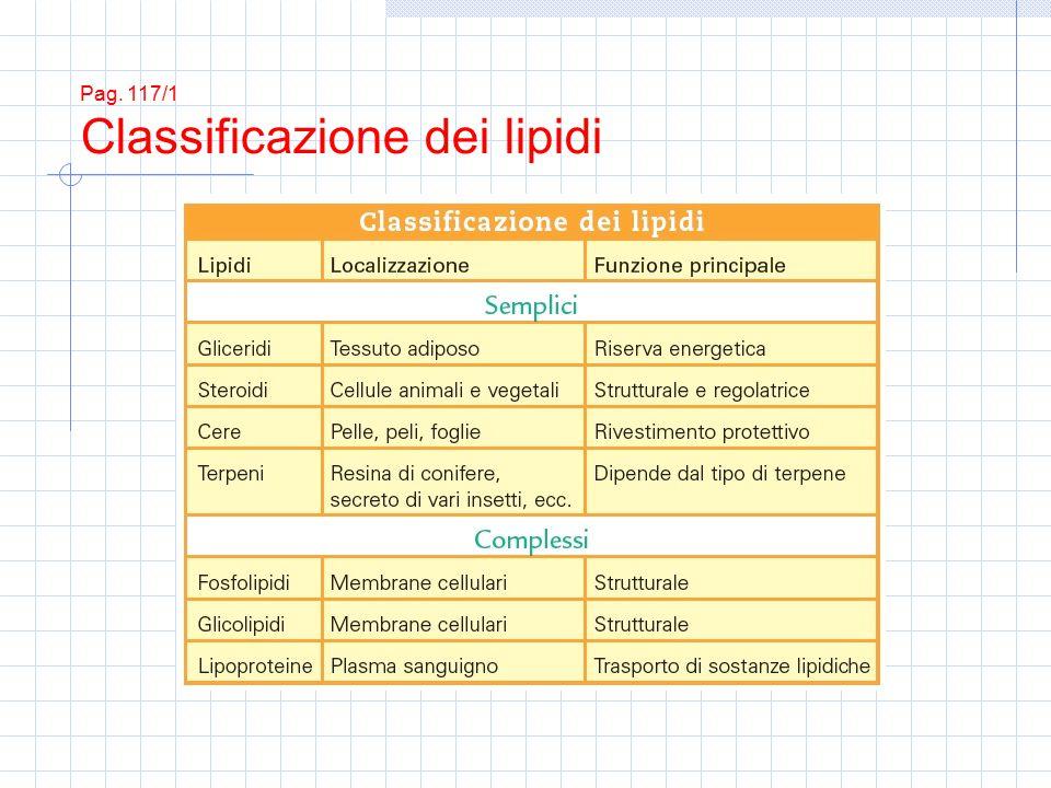 Pag. 117/1 Classificazione dei lipidi