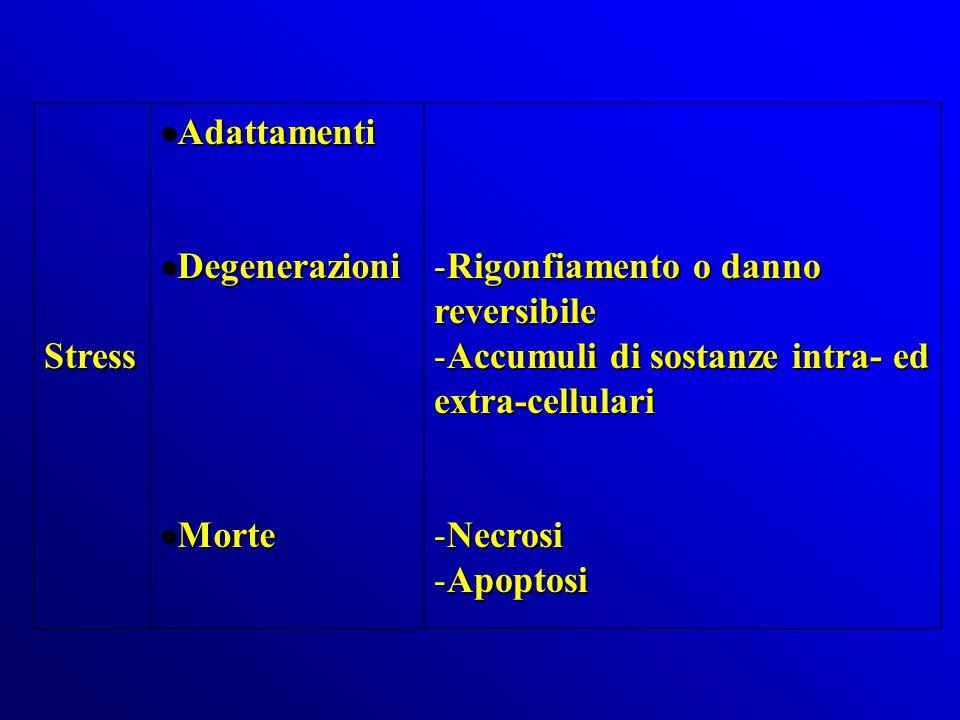 Stress Adattamenti. Degenerazioni. Morte. Rigonfiamento o danno reversibile. Accumuli di sostanze intra- ed extra-cellulari.