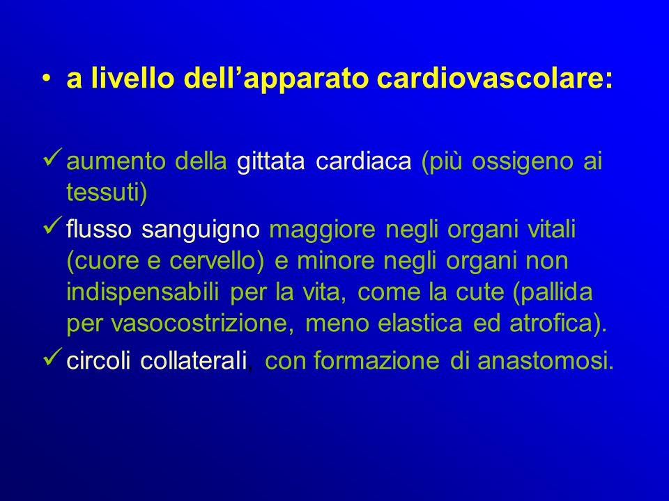 a livello dell'apparato cardiovascolare: