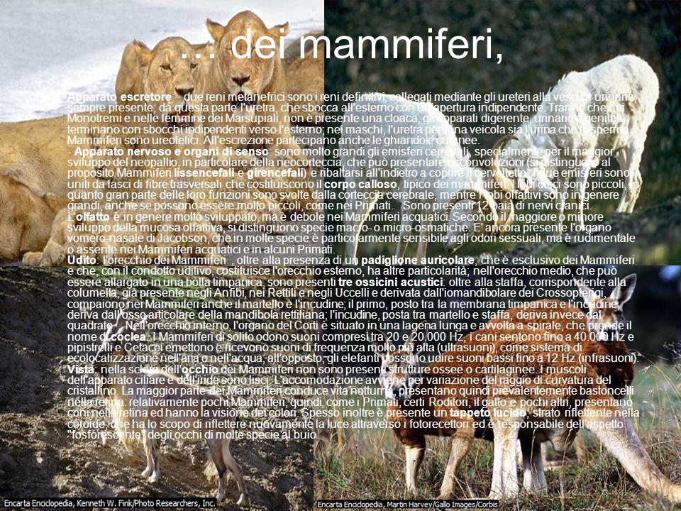 … dei mammiferi,