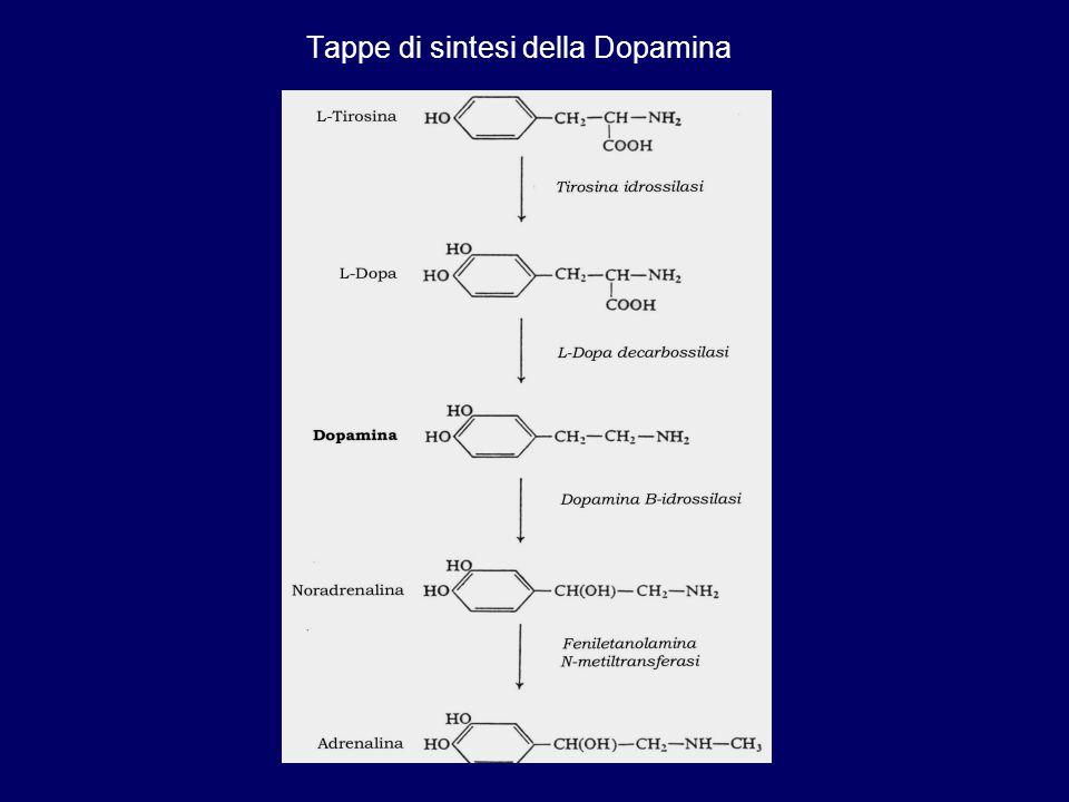 Tappe di sintesi della Dopamina