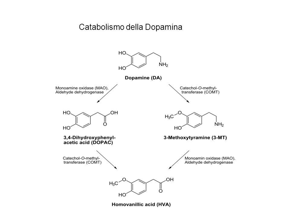 Catabolismo della Dopamina