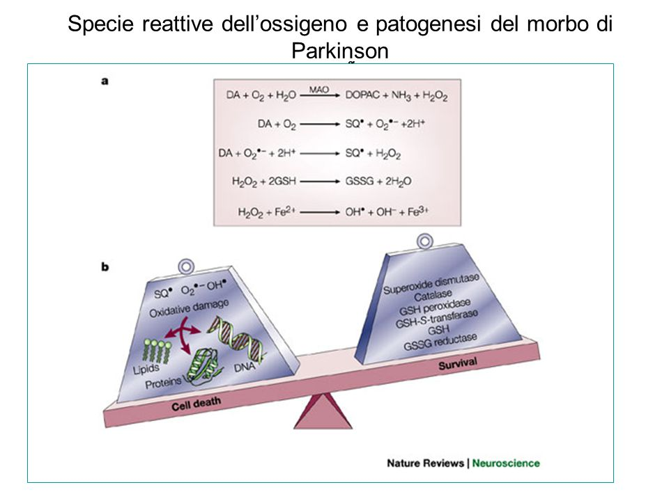 Specie reattive dell'ossigeno e patogenesi del morbo di Parkinson