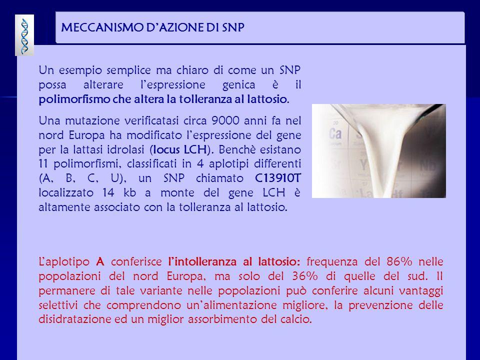 MECCANISMO D'AZIONE DI SNP