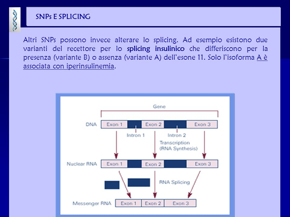 SNPs E SPLICING