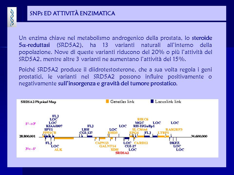 SNPs ED ATTIVITÀ ENZIMATICA