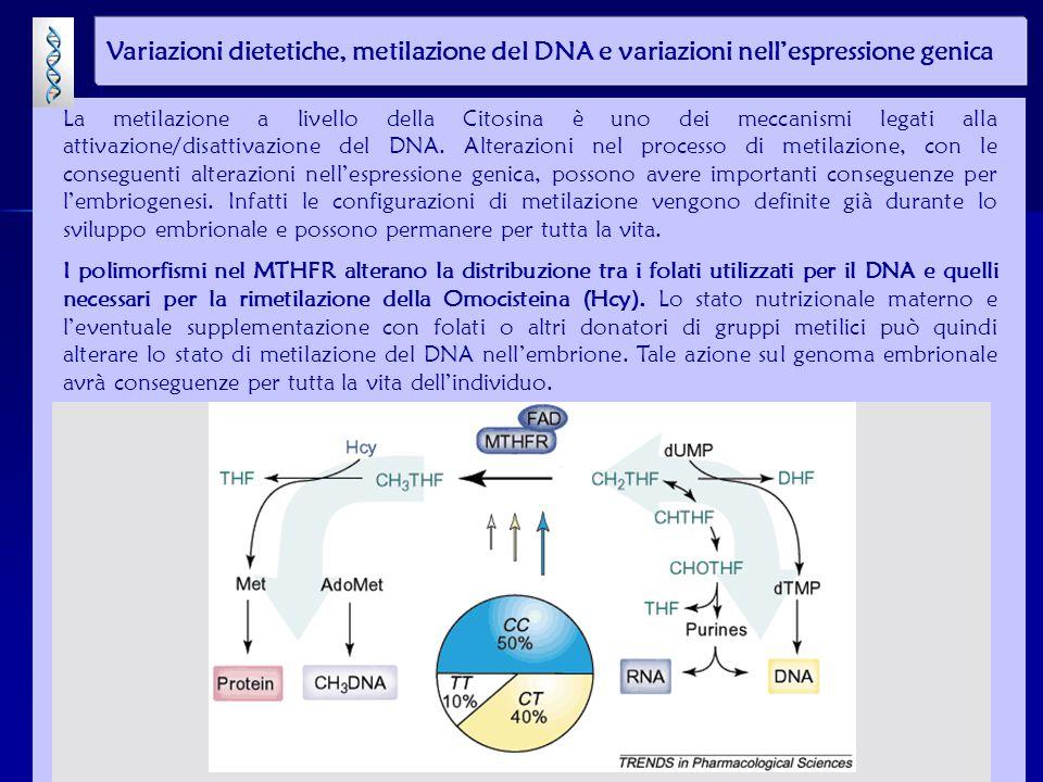 Variazioni dietetiche, metilazione del DNA e variazioni nell'espressione genica