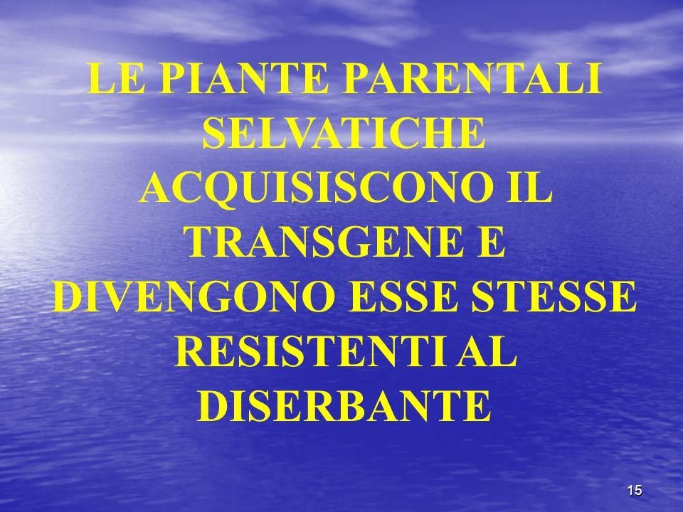 LE PIANTE PARENTALI SELVATICHE ACQUISISCONO IL TRANSGENE E DIVENGONO ESSE STESSE RESISTENTI AL DISERBANTE