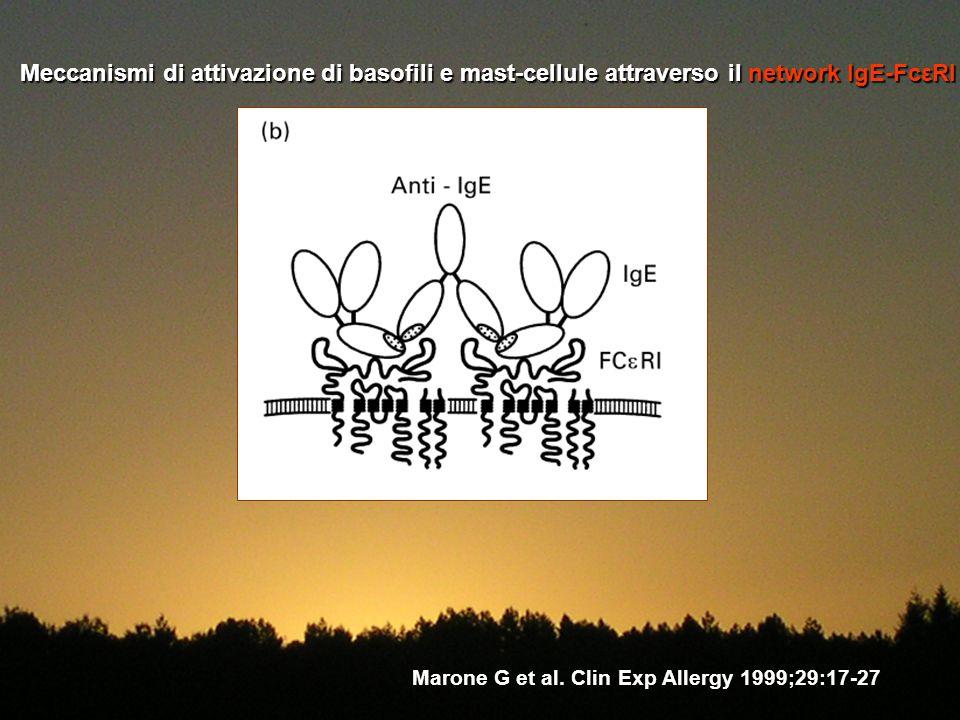 Meccanismi di attivazione di basofili e mast-cellule attraverso il network IgE-FcεRI