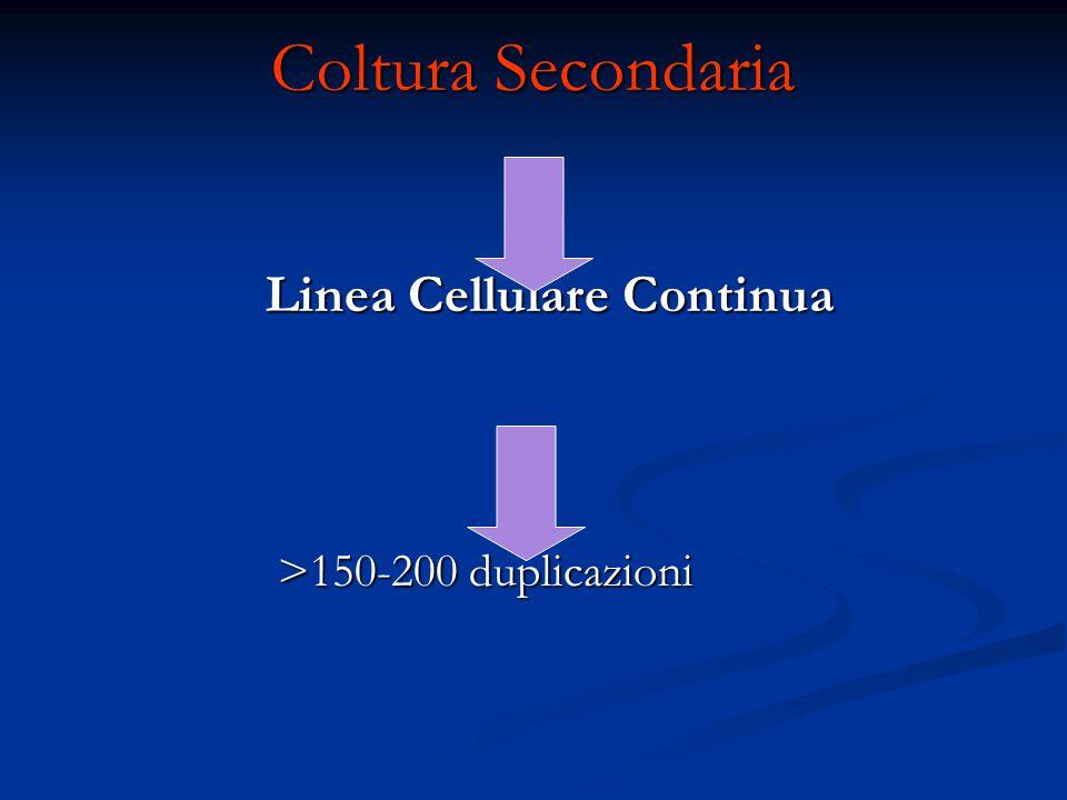 Coltura Secondaria Linea Cellulare Continua >150-200 duplicazioni