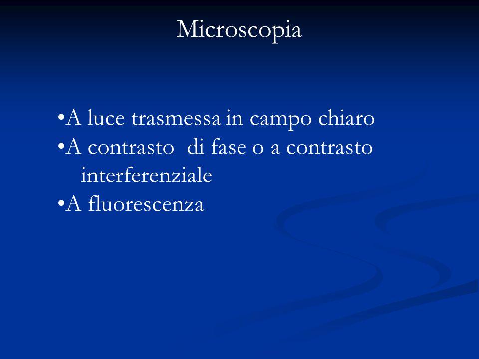 Microscopia A luce trasmessa in campo chiaro