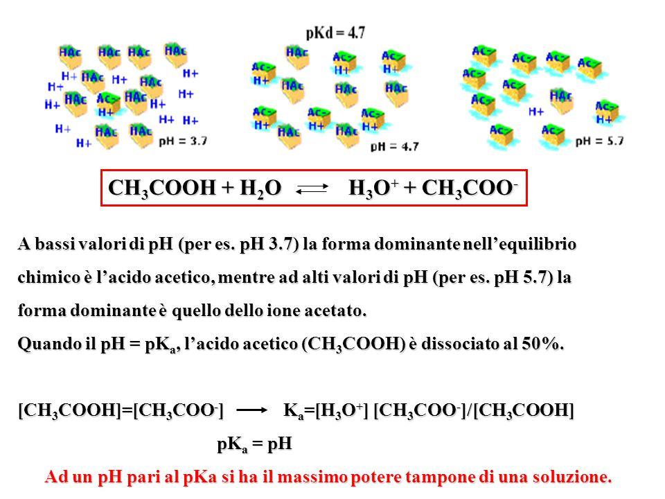 CH3COOH + H2O H3O+ + CH3COO- A bassi valori di pH (per es. pH 3.7) la forma dominante nell'equilibrio.