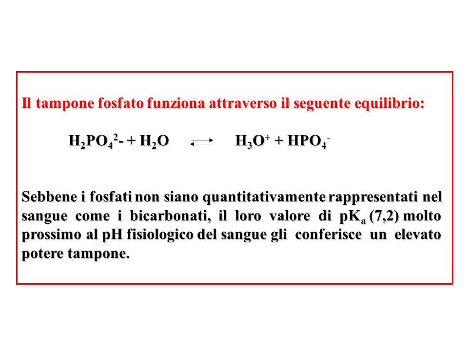 Il tampone fosfato funziona attraverso il seguente equilibrio: