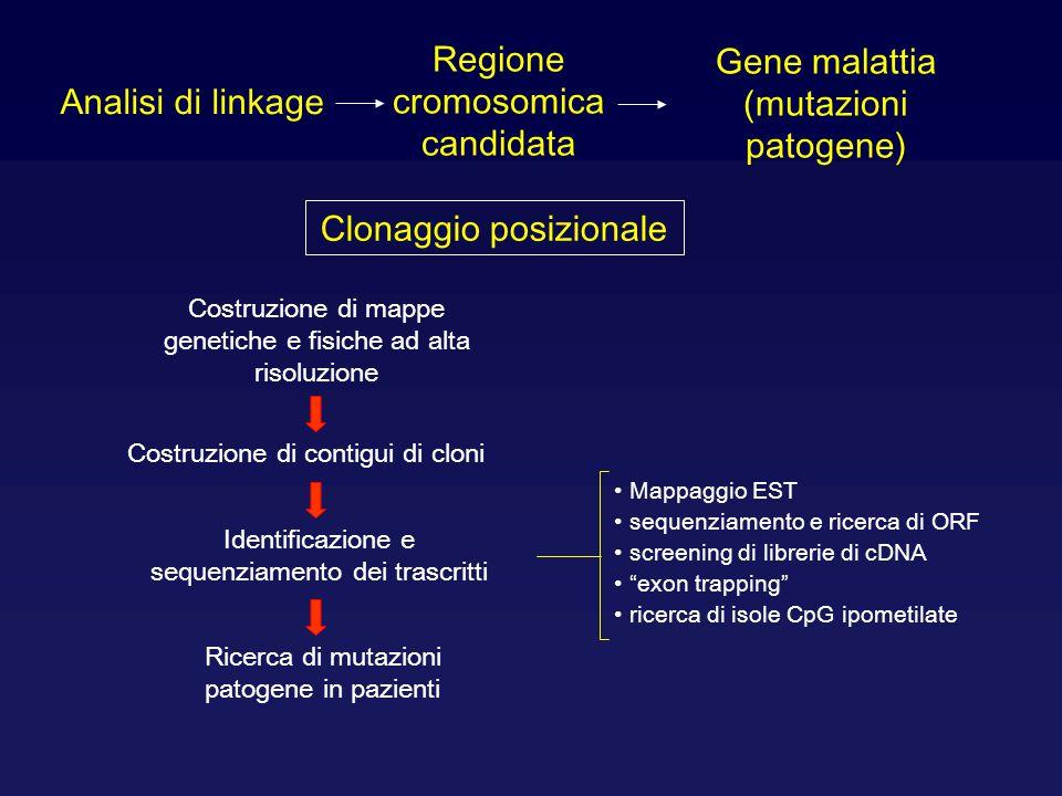Regione cromosomica candidata Gene malattia (mutazioni patogene)