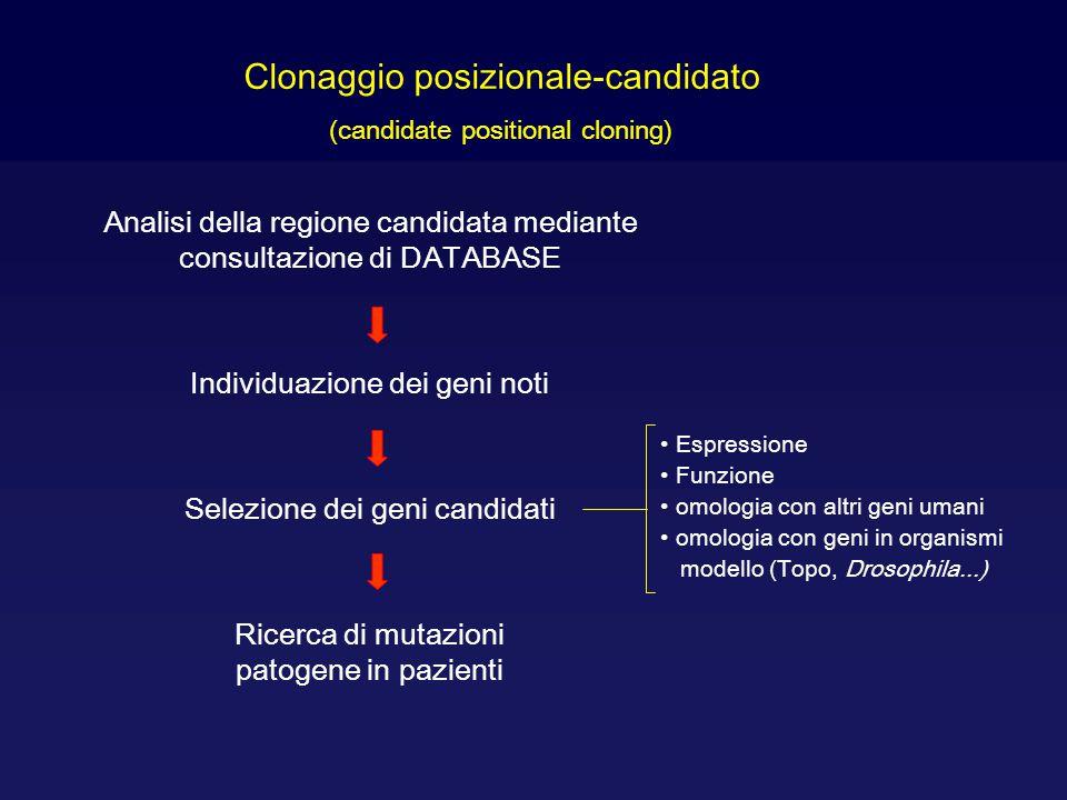 Clonaggio posizionale-candidato