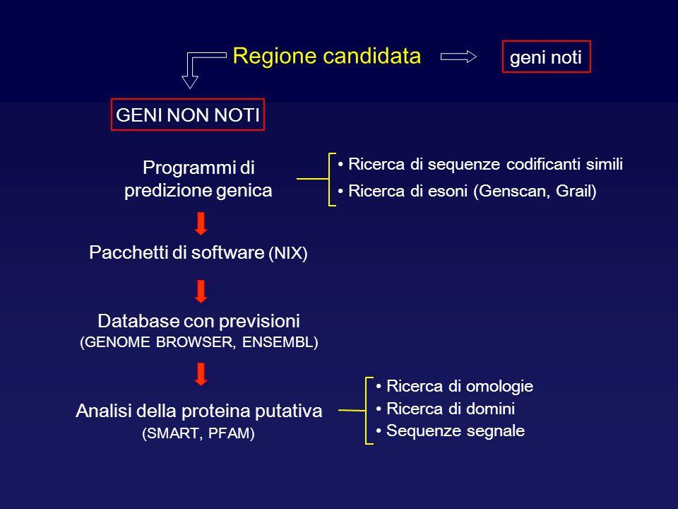 Regione candidata geni noti GENI NON NOTI