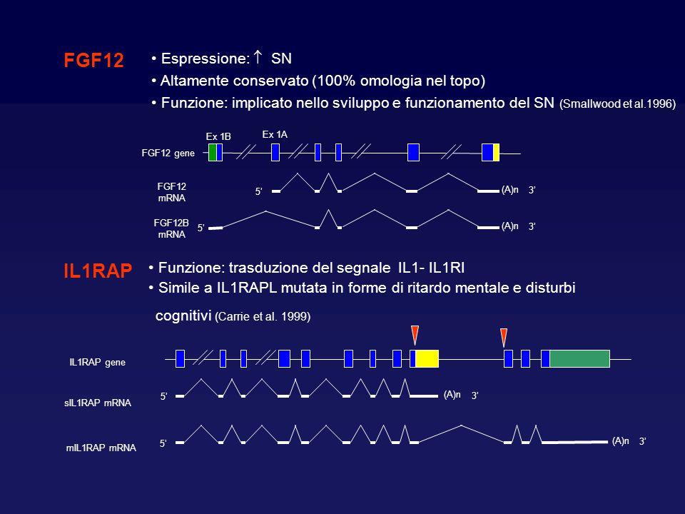 FGF12 IL1RAP Espressione:  SN