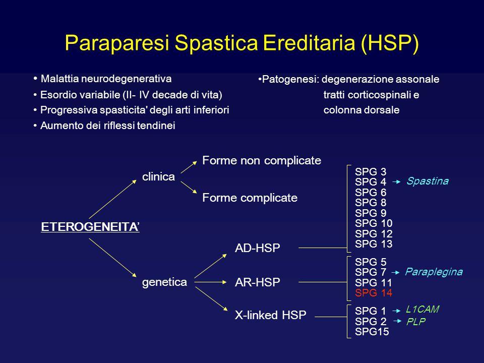 Paraparesi Spastica Ereditaria (HSP)