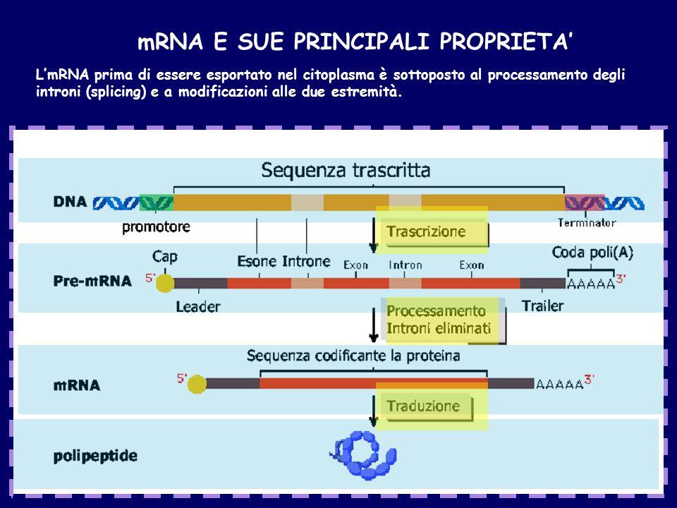 mRNA E SUE PRINCIPALI PROPRIETA'
