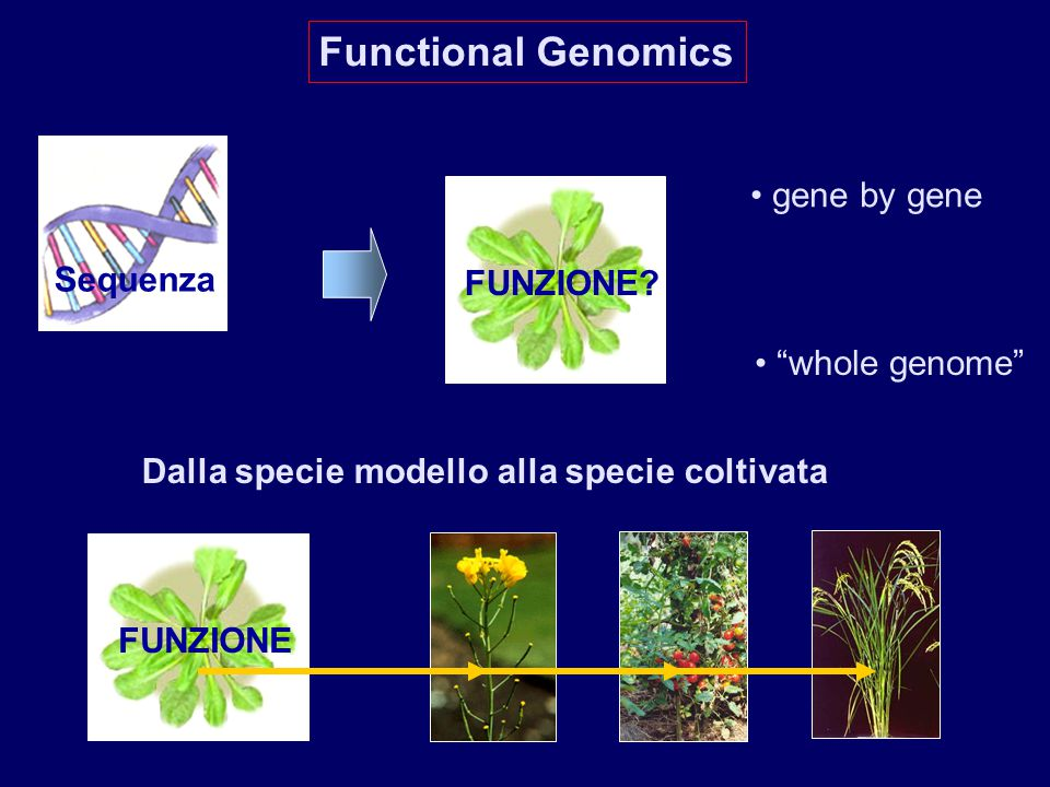 Functional Genomics gene by gene Sequenza FUNZIONE whole genome