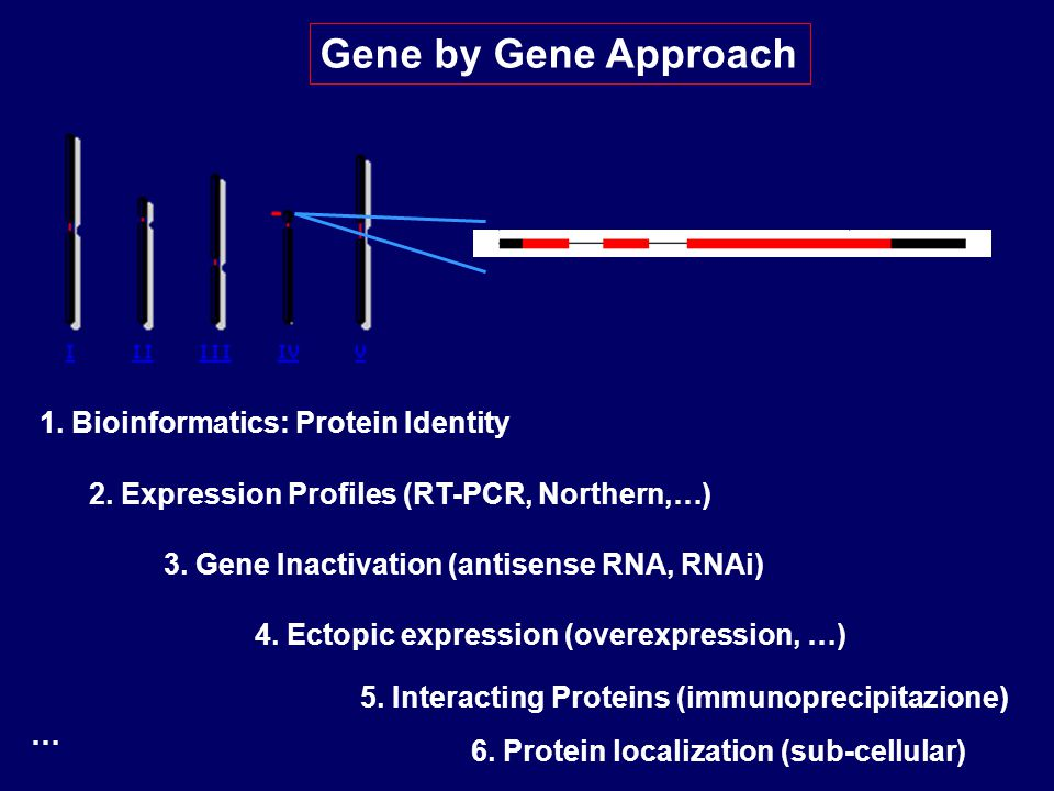 Gene by Gene Approach 1. Bioinformatics: Protein Identity