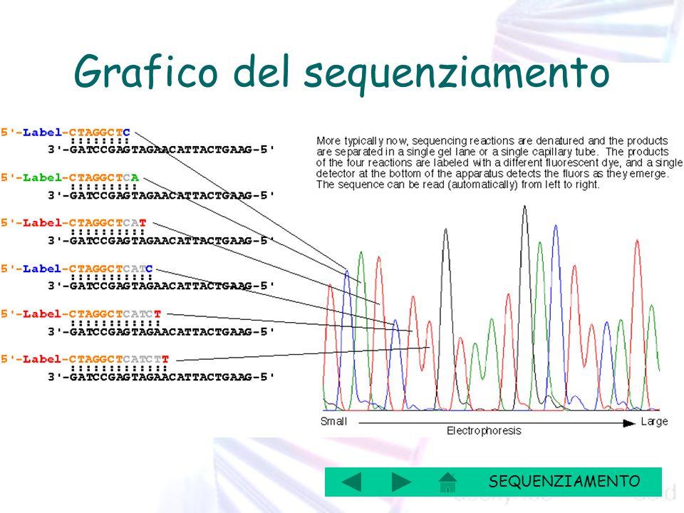 Grafico del sequenziamento