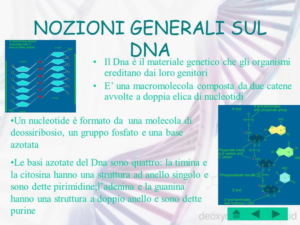 NOZIONI GENERALI SUL DNA