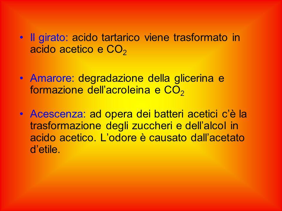 Il girato: acido tartarico viene trasformato in acido acetico e CO2