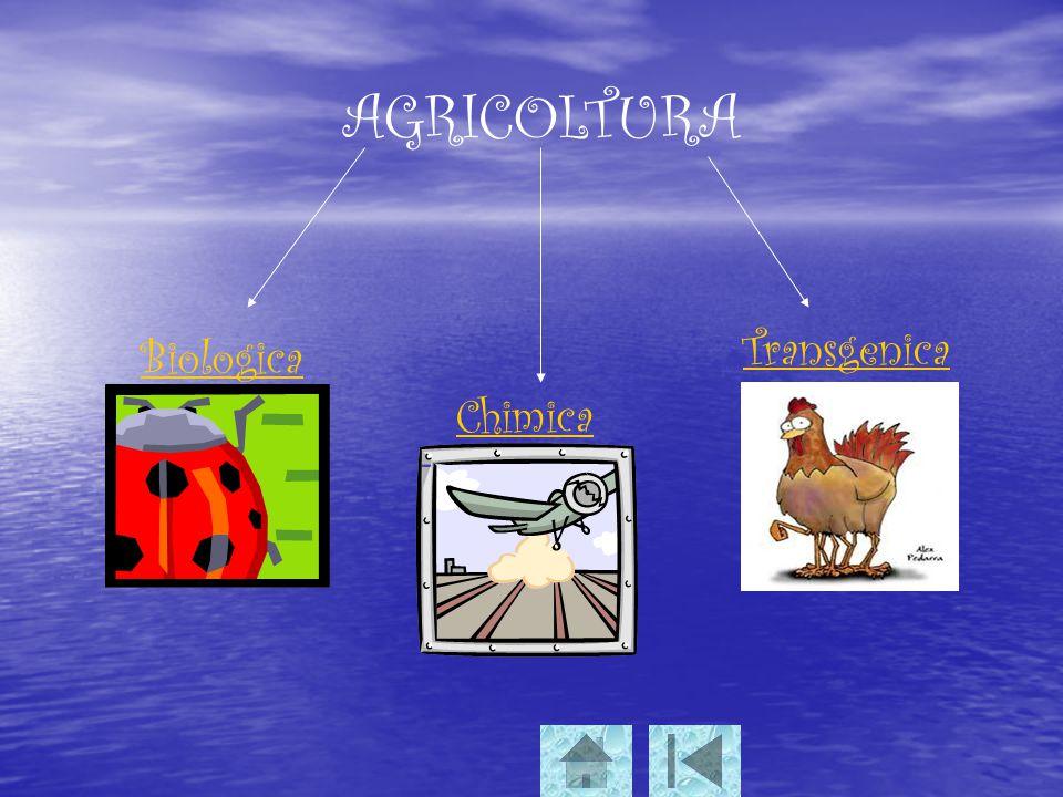 AGRICOLTURA Transgenica Biologica Chimica