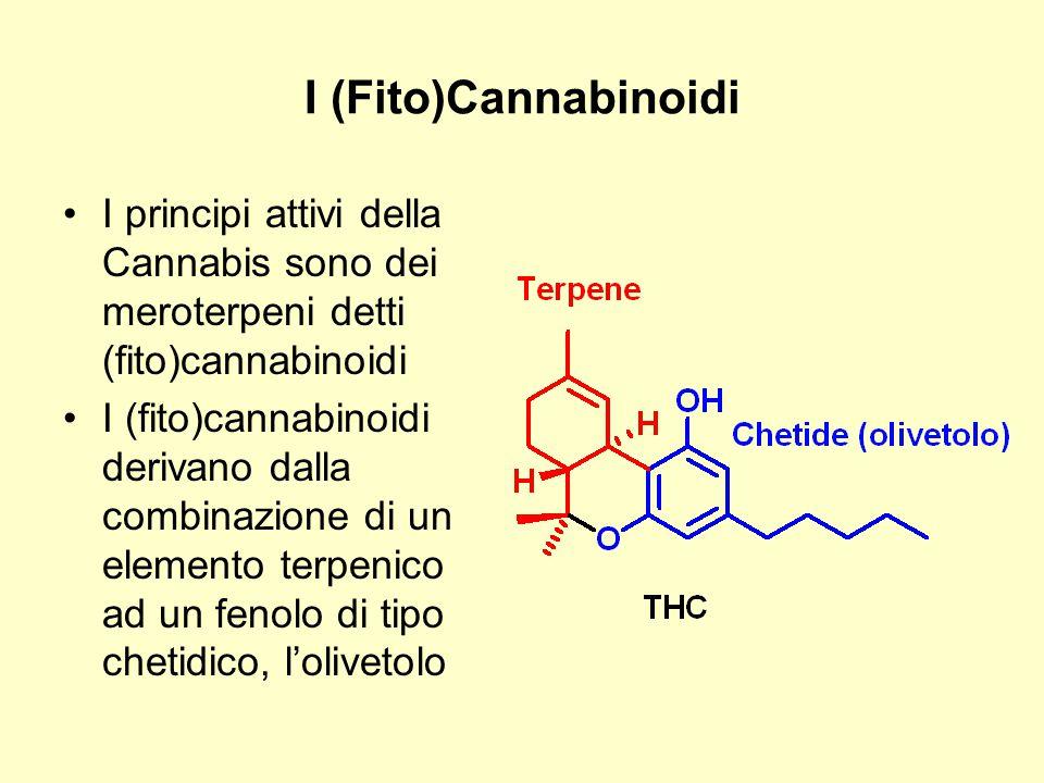 I (Fito)Cannabinoidi I principi attivi della Cannabis sono dei meroterpeni detti (fito)cannabinoidi.