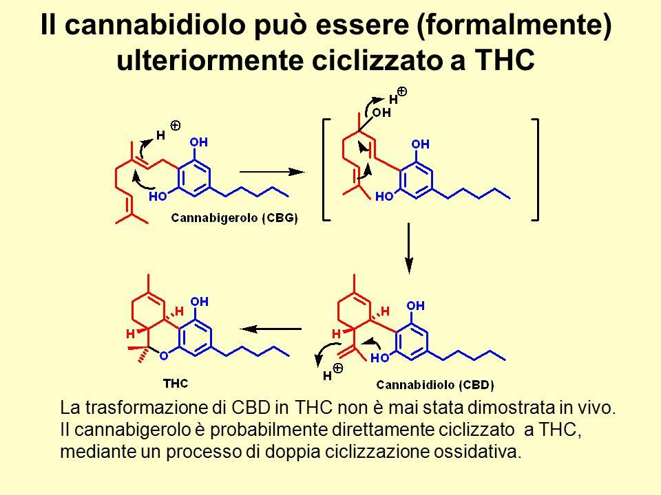 Il cannabidiolo può essere (formalmente) ulteriormente ciclizzato a THC