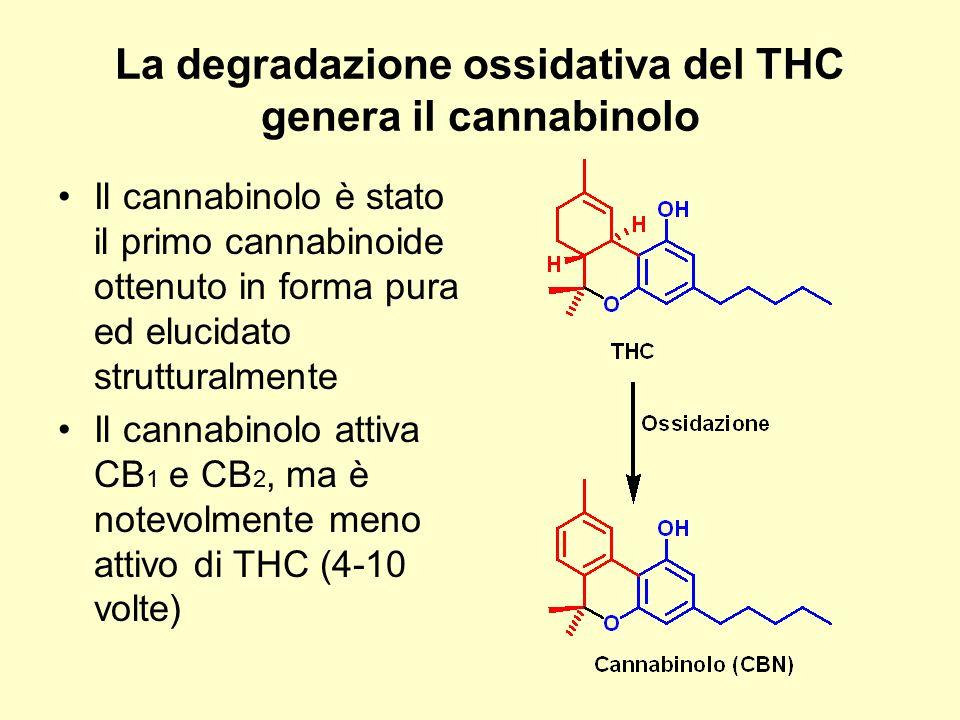 La degradazione ossidativa del THC genera il cannabinolo