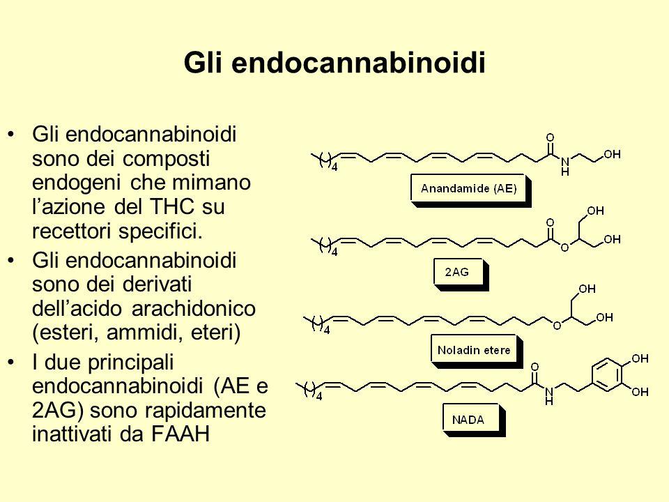 Gli endocannabinoidi Gli endocannabinoidi sono dei composti endogeni che mimano l'azione del THC su recettori specifici.
