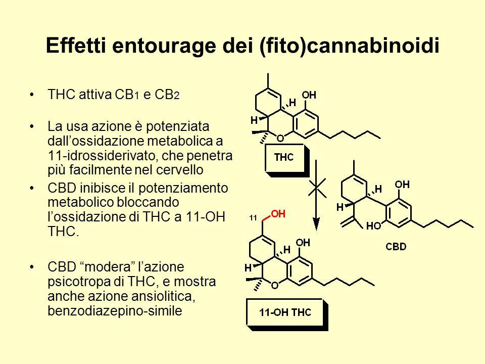 Effetti entourage dei (fito)cannabinoidi