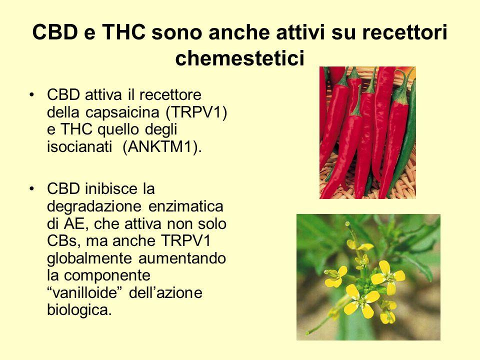 CBD e THC sono anche attivi su recettori chemestetici