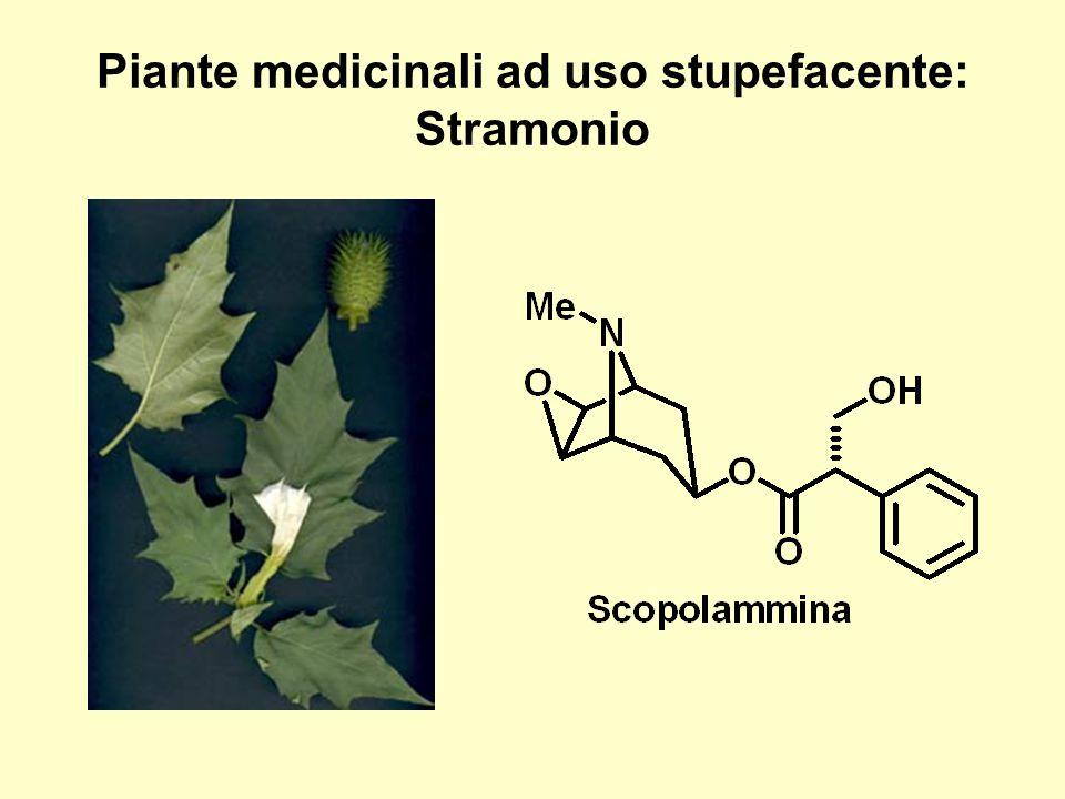 Piante medicinali ad uso stupefacente: Stramonio